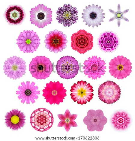 Big Selection of Various Colorful  Kaleidoscopic Mandala Flowers Isolated on White. Big Collection of flowers in Concentric shape pattern. Rose, Daisy Flowers in Red, Yellow, Orange, Purple colors. - stock photo