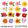 Big set of beautiful colorful flowers. Raster version - stock vector