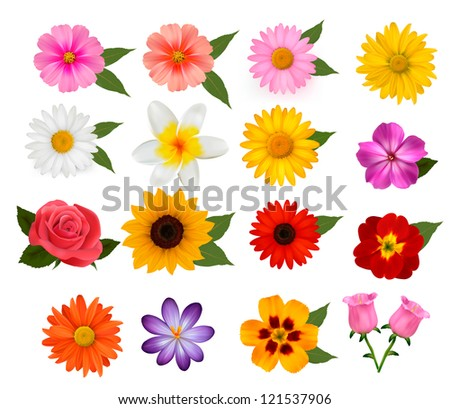 Big set of beautiful colorful flowers. Raster version