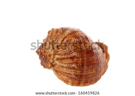Big shell isolated on white