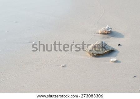Big shell on beach - stock photo
