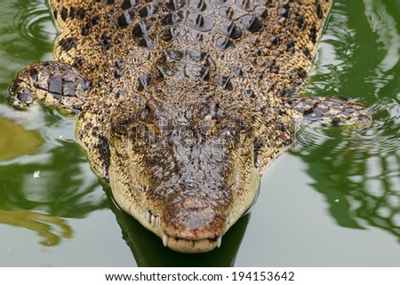 Big siamese crocodile in water - stock photo