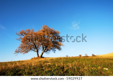 Big solitary oak tree in autumnal colors - stock photo