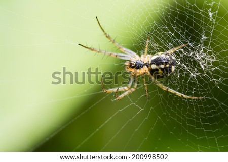 Big Spider On Web Waiting For Prey - stock photo