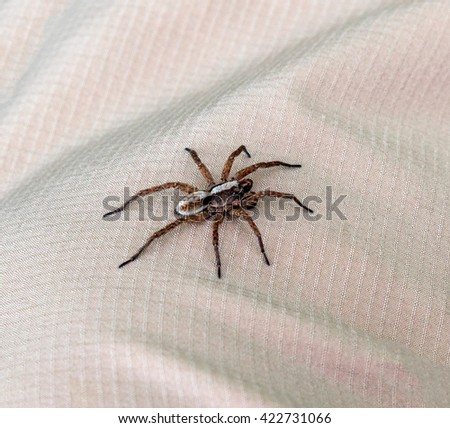 Big spider sits on the fabric and basks in the sun - Bulgaria