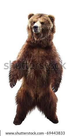 Big standing brown bear, isolated - stock photo