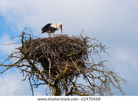 big stork on a nest against the blue sky.