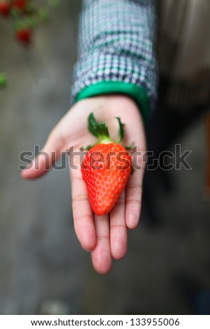 big strawberry in hand