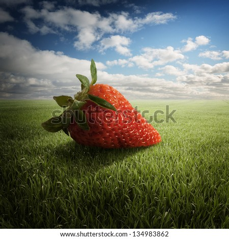 big strawberry on the field - stock photo