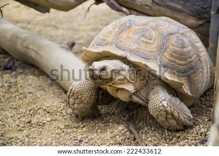 Big tortoise - stock photo
