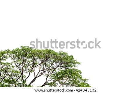 Big tree and green leaf on white background - stock photo