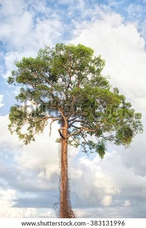 big tree and sky - stock photo