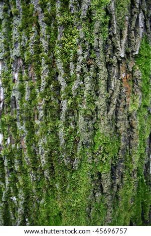 Big tree bark - stock photo