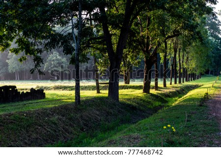 Big Tree fence and morning sunlight in Sukhothai Historical Park, Thailand.