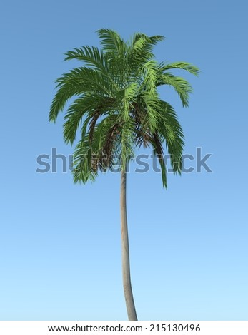 Big Tree in blue background