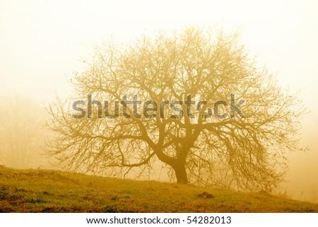 Big tree in the morning fog - stock photo