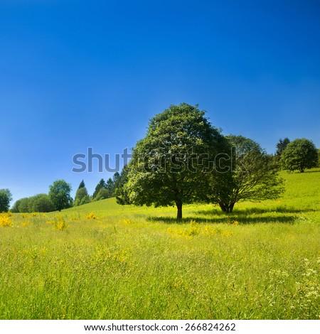 Big tree on a green meadow under deep blue sky, landscape in France - stock photo
