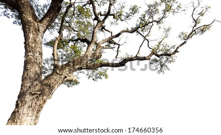 Big tree on a white background - stock photo