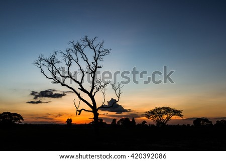 Big tree silhouette sunset sky background - stock photo