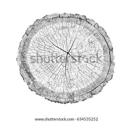 Irregular tree bark surface stock images royalty free for Large tree trunk slices