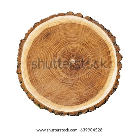 Big tree trunk slice cut woods stock photo 639904528 for Large tree trunk slices