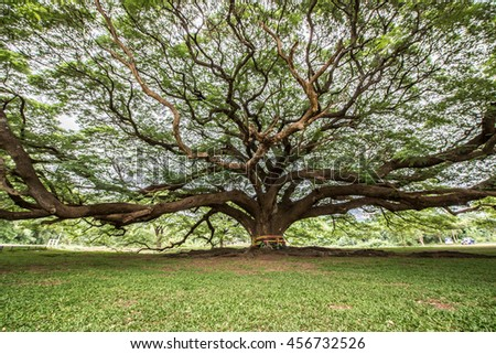 Big tree with branch magnify - stock photo