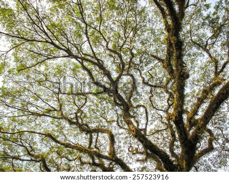 big tree with dramatic form texture  - stock photo