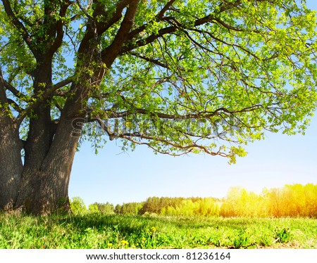 Big tree with green leaves on green spring meadow with flowers - stock photo