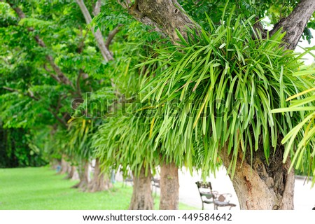 Big tree with green plant attached on trunk in park, Green natural background