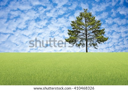 Big tree with meadow green and blue sky background.