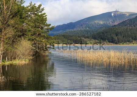 Big trees in meadow by the coastline of a lake or river, under cloudy sky. - stock photo