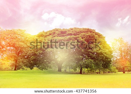 Big trees in the garden - stock photo