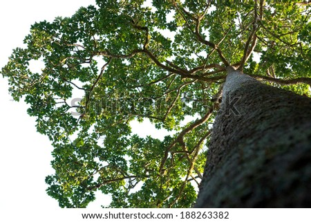 Big trees in the rain forest - stock photo