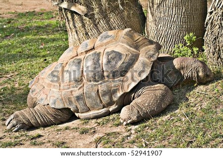 Big turtle at zoo - stock photo