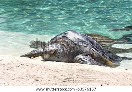 Big turtle on sand near water - stock photo