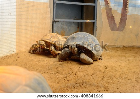 Big Turtles at the  Beijing Zoo, a zoological park in Beijing, China.