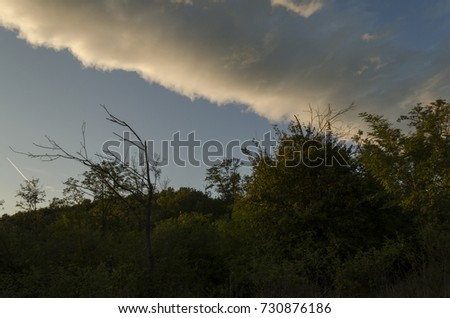 big wide cloudy sky in forest