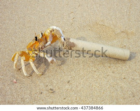 Big yellow tropical crab with paper tube in claw at sandy beach - stock photo