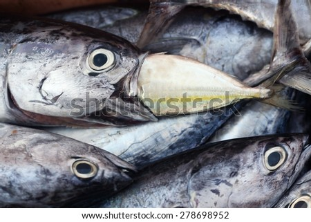 bigger fish eat smaller fish - stock photo