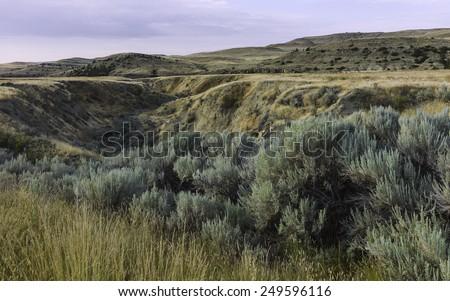 Billings, Montana, USA - The rugged landscape of bush land and undulations of the prairie near Billings at dawn, Montana, USA. - stock photo