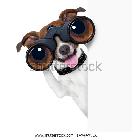 binoculars dog searching, looking and observing - stock photo
