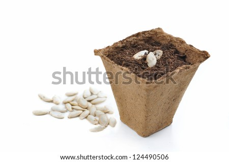 biodegradable peat pot for seedlings isolated on white background - stock photo