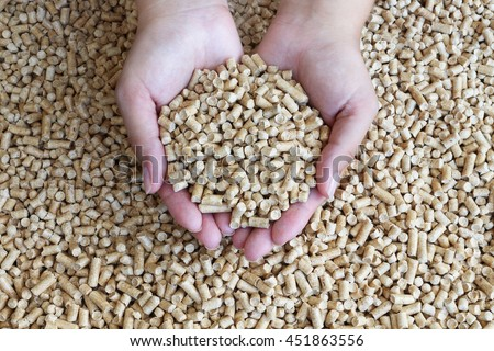 Biofuels. Alternative biofuel from sawdust , wood pellets in hand. The cat litter. - stock photo