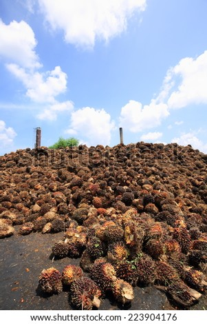 biogas plant with beautiful blue sky and white cloud  ,  fresh palm oil fruit from truck.  , Palm Oil Fruits  - stock photo