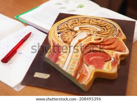 Biology classroom - stock photo