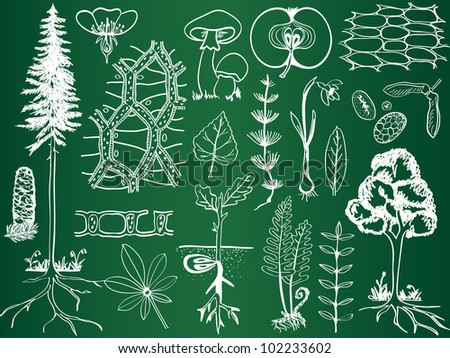 Biology plant sketches on school board - botany hand-drawn illustration - stock photo