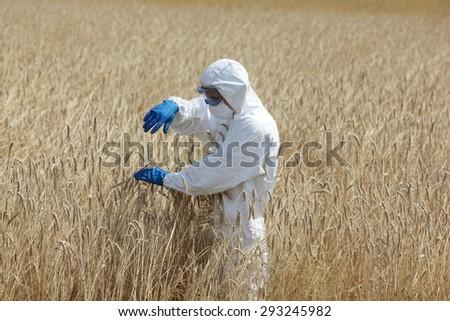 biotechnology engineer on field examining ripe ears of grain - stock photo
