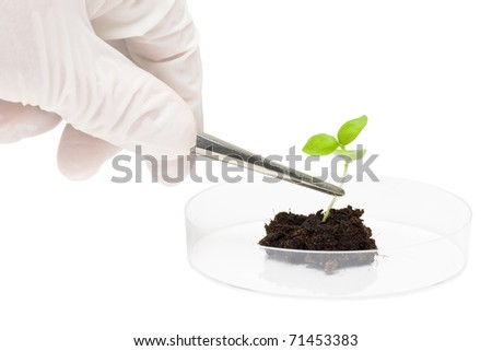 Biotechnology researcher puts plant specimen into petri dish - stock photo