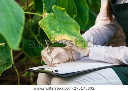 Biotechnology woman engineer with a clipboard and pen examining plant leaf for disease! - stock photo