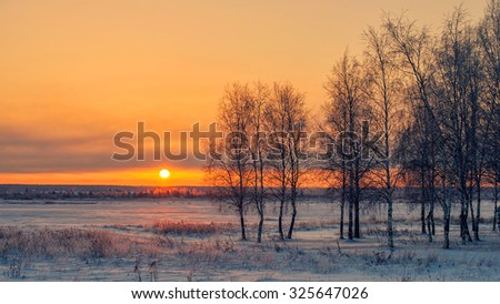 Birch at sunset in winter - stock photo
